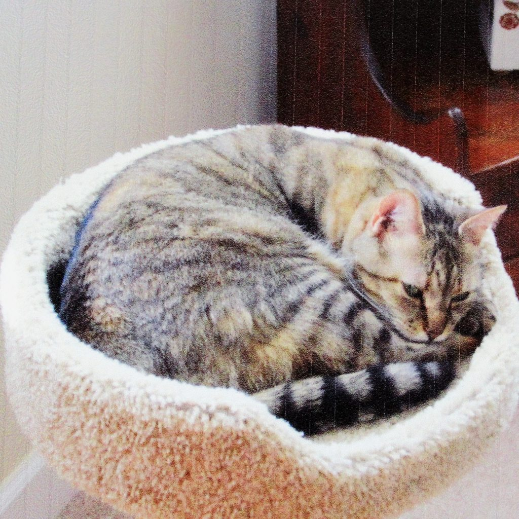 A brown striped cat laying in a cat tree
