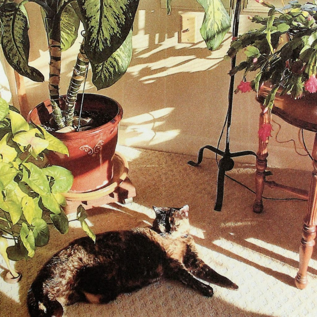 Spunky, a black and grey cat, laying on the floor surrounded by plants and sunlight.