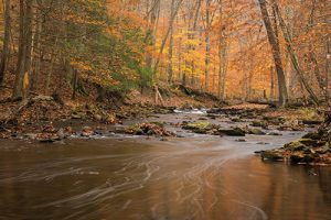 A creek running through the woods at Cunningham Falls, just a short distance from our senior living community in Frederick.