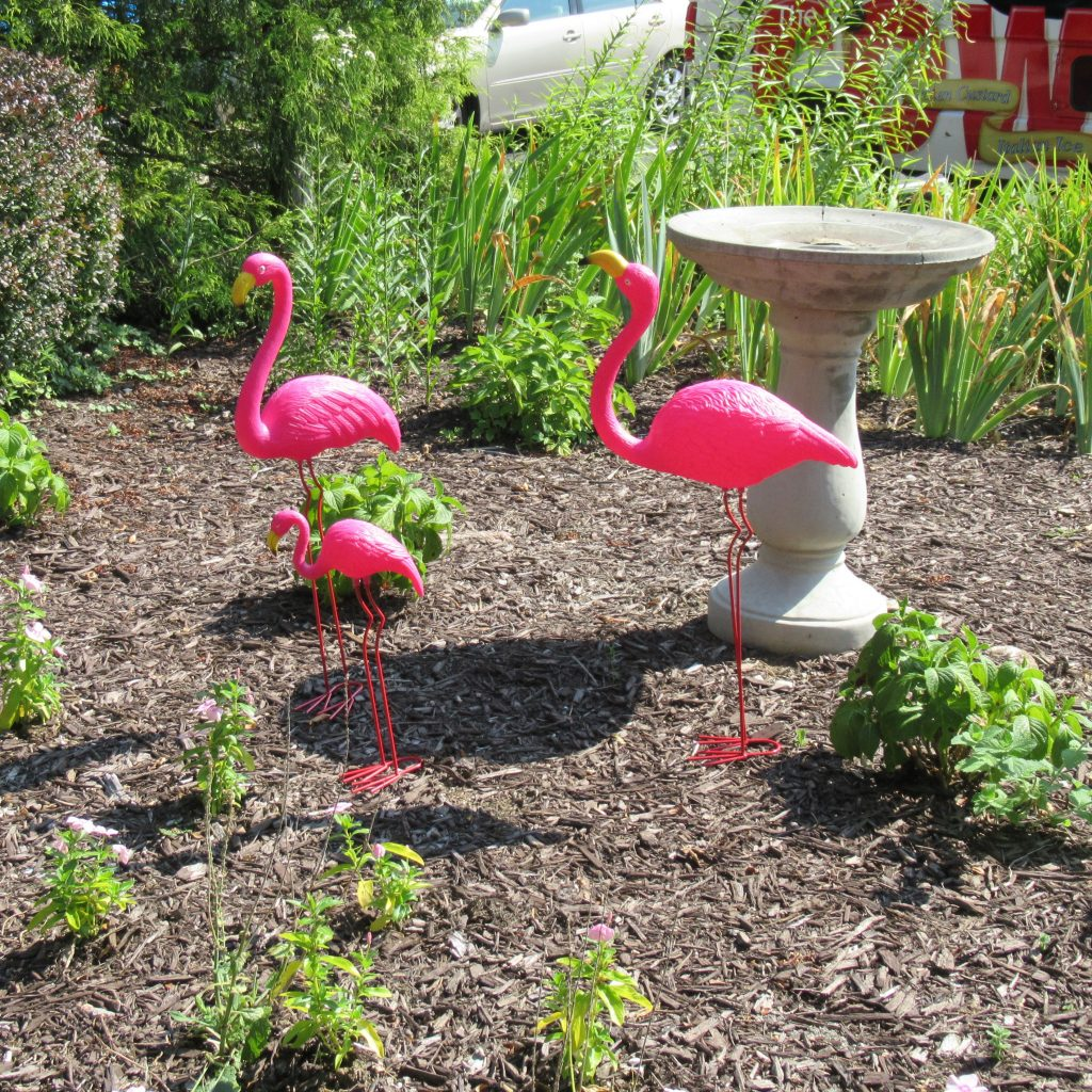 Lawn ornament flamingos decorating one of our gardens.